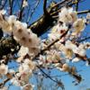 【公園散歩】馬場花木園で、いろんな花々を鑑賞