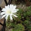助産院のお花たち