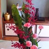赤い花 レナンセラ