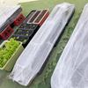 新芽、若葉のときプランターを台風や強風から守る透明ラップの使い方