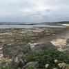 【冬の沖縄で磯遊び】大度海岸で、ため池観察