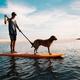 犬と冷房。夏の冷房事情と犬の過ごし方は?〜我が家の場合