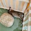 ウサギのちまき今日の2枚『眠いときの薄目』