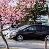 【倉敷川千本桜】春の訪れ、河津桜を撮影してきた!