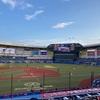 楽しみにしていた今年初のプロ野球観戦!青空が広がり、心地良い風を感じながらのプロ野球観戦は最高でした!