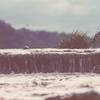 遥かなる河。とりあえず多摩川へでも