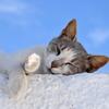 横向き睡眠グッズで睡眠老化を防ぐ!!無自覚な睡眠時無呼吸症候群を改善する為に横向き枕を激しくオススメする理由。