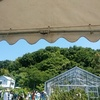 松山大学薬用植物園の一般公開へ