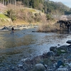 3月27日 犬上川 渓流釣り 第二解禁