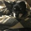 安楽死という選択ができるように、愛犬のQoLに規準をつけてみようとおもう。