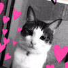 【保護活動】【多頭飼い】保護施設から迎えた幸のお話 ~我が家の猫のお話をします(その3)幸~