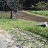 草刈りサンデー