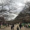 上野公園の桜はまだ蕾だった