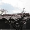 入学式① 桜が咲いて、準備完了