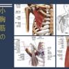 小胸筋の圧痛好発部位と運動療法