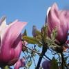 4月13日誕生日の花と花言葉歌句