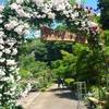 毛呂山(もろやま)滝ノ入 ROSE GARDENへ行ってきました