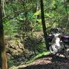 また林道 今度はカブで遅咲きのボタン桜と新緑