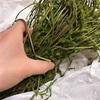 山で「木の芽」1kg採ってきました