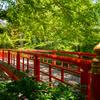 さわやかな夏を楽しみたいなら、清涼感のある竹林散歩に出かけよう
