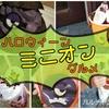 【USJ】ハロウィン限定グルメ!ミニオンフードを一挙にご紹介!
