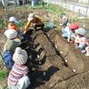 毎年恒例のジャガイモ栽培