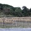 米の収穫が終わりました🌾