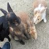 ウサギの島で入るラドン泉。いや、やっぱりウサギが主役でしょう。 大久野島休暇村。