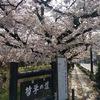 さくら満開の哲学の道へ(京都)…過去20170414