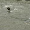 阿木川は増水していた