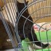 昨日、我が家に連れて来た元野良の子猫【すみ】は、トイレ上手!