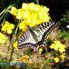 ビオガーデンは蝶々や野鳥等、生物を見る視覚で脳を活性化してくれます