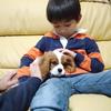 平成最後に仔犬と子供のパワーをキャッチ!