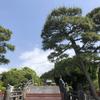 【鎌倉いいね】久しぶりの鎌倉さんぽ。八幡様は新緑で覆われていました。