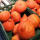 ドイツ産のかぼちゃ「北海道- Hokkaido」