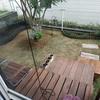 だいぶ形になってきました 庭の花壇計画