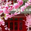 【完全ガイド】北京大学Yenching Academyへの応募 ~必要事項と対策~