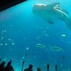 【アメリカ最大級】アトランタのジョージア水族館へ行ってきた!〜Part1〜