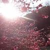 Eテレ「オイコノミア〜祝受賞!文学ノ経済学〜」(再放送)を観て。なに立っとんねん!