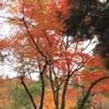 安芸の宮島 弥山の紅葉 まさに錦♪