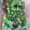 春の花が登場