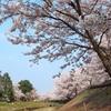 川島区の桜