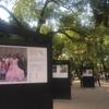 ローマ地区街歩き | 公園でボ〜ッと編