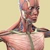 解剖学的に考える大胸筋狙いの筋トレメニュー