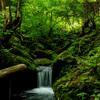 新緑眩しい海沢探勝路から大岳山〜鋸尾根を歩いてクラフトビールを飲みに行く週末