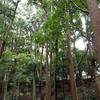定期的にいくご近所の森