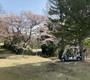 達人のラウンド報告2021:満開の桜の元、シャンクも笑えるゴルフかな。