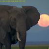本日の備忘録/優しい象さんの悲劇、続報その他