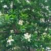 【日常・ひとりごと】7月・名護へバストリップ・21世紀の森ビーチへ