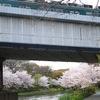 桜と京阪電車!